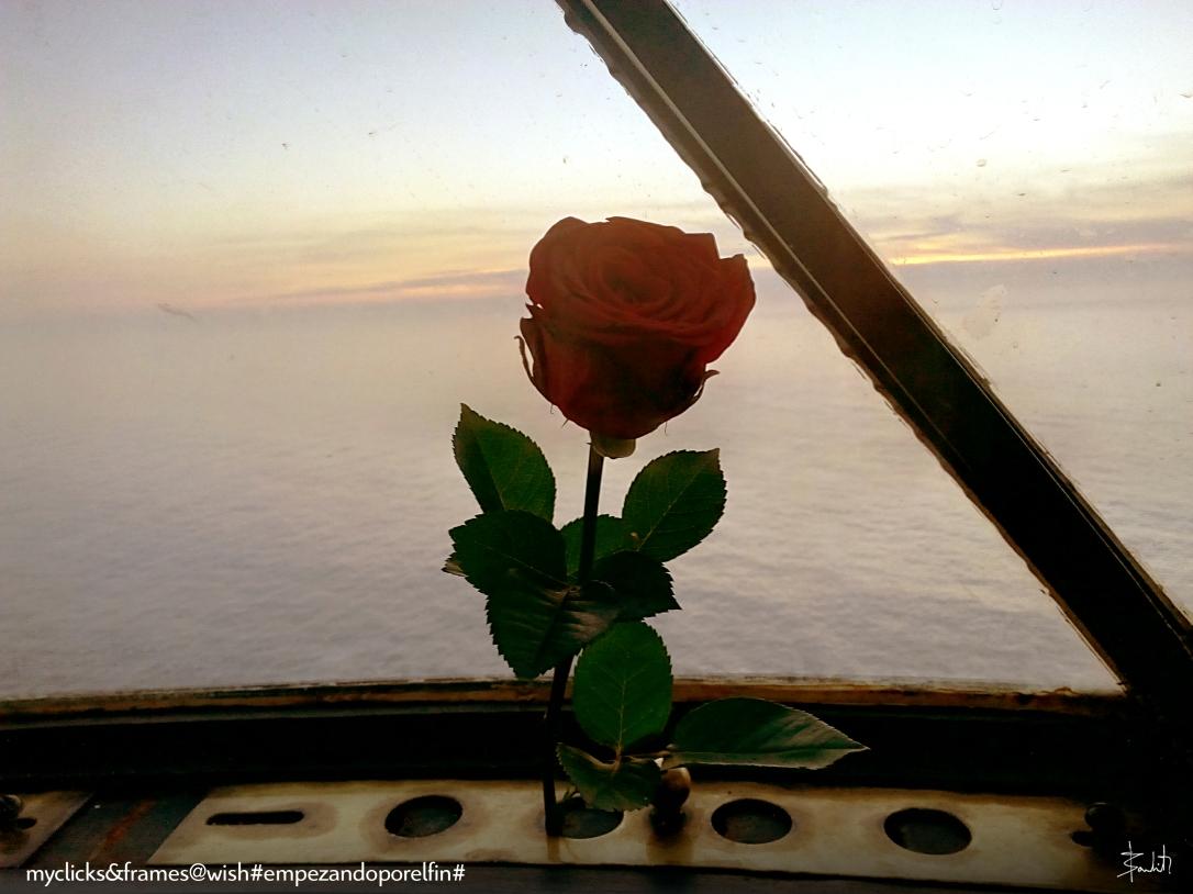 rose wish